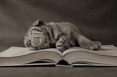 Perrito que estudia por la mañana imagen de archivo libre de regalías