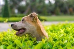 Perrito que juega en un arbusto Fotografía de archivo libre de regalías