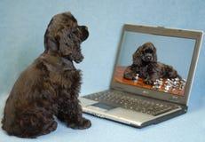 Perrito que mira el ordenador Fotos de archivo libres de regalías