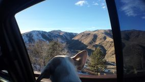 Perrito que mira las colinas Imágenes de archivo libres de regalías