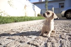 Perrito que mira para arriba Imagen de archivo libre de regalías