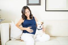 Perrito que protege a la mujer embarazada que se sienta en el sofá imagen de archivo