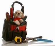 Perrito que se sienta en bolsa de herramientas Fotografía de archivo