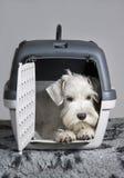 Perrito que se sienta en su portador del animal doméstico del transportador Fotos de archivo