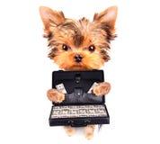 Perrito que sostiene el caso con el dinero Imagen de archivo