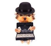 Perrito que sostiene el caso con el dinero Imagen de archivo libre de regalías