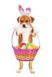 Perrito que sostiene la cesta de Pascua Fotografía de archivo
