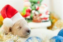 Perrito recién nacido en un casquillo rojo Fotografía de archivo libre de regalías