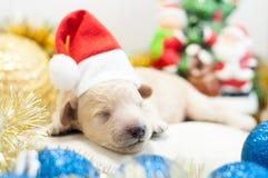 Perrito recién nacido en un casquillo rojo Foto de archivo