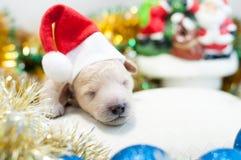 Perrito recién nacido en un casquillo rojo Fotos de archivo