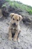 Perrito sin hogar Fotografía de archivo libre de regalías