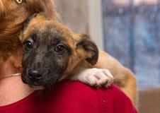 Perrito sin hogar de un refugio Imagenes de archivo