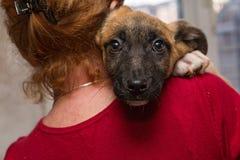 Perrito sin hogar de un refugio Fotografía de archivo libre de regalías