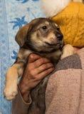 Perrito sin hogar de un refugio Foto de archivo