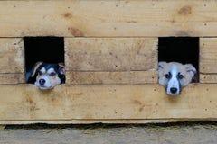 Perrito sin hogar en caseta de perro Imagen de archivo libre de regalías