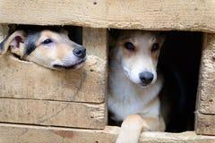 Perrito sin hogar en caseta de perro Foto de archivo