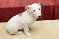 Perrito sin hogar en refugio Fotos de archivo