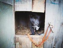 Perrito sin hogar en un refugio para los perros Imagen de archivo