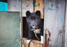 Perrito sin hogar en un refugio para los perros Foto de archivo libre de regalías