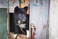 Perrito sin hogar en un refugio para los perros Fotos de archivo