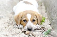 Perrito sin hogar que miente en la tierra Fotos de archivo