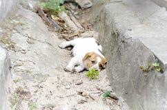 Perrito sin hogar que miente en la tierra Fotografía de archivo
