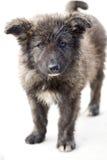 Perrito sin hogar solo Imagen de archivo