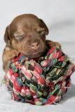Perrito Snuggling Foto de archivo libre de regalías