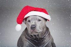 Perrito tailandés del ridgeback en sombrero de Navidad Fotografía de archivo