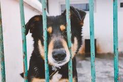 Perrito triste del perro en refugio para animales Imagen de archivo