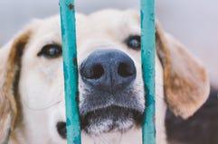 Perrito triste del perro en refugio para animales Fotos de archivo
