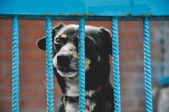 Perrito triste del perro en refugio para animales Foto de archivo