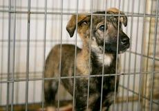Perrito triste en el refugio para los animales sin hogar Imagen de archivo