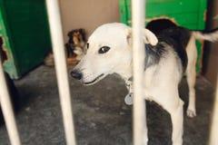 Perrito triste lindo que mira a través de la jaula del refugio, m emocional infeliz Fotos de archivo libres de regalías