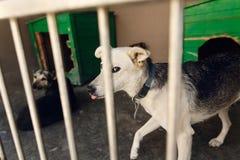Perrito triste lindo que mira a través de la jaula del refugio, m emocional infeliz Foto de archivo