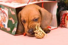 Perrito un regalo en el embalaje celebrador foto de archivo libre de regalías