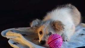 Perrito y bola rosada metrajes