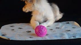 Perrito y bola rosada almacen de metraje de vídeo