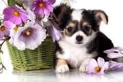 Perrito y flores Imagen de archivo libre de regalías