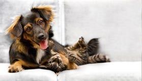 Perrito y gatito Fotografía de archivo libre de regalías