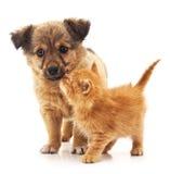 Perrito y gatito fotos de archivo