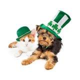 Perrito y gatito del día del St Patricks Fotos de archivo