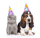 Perrito y gatito del perro de afloramiento con los sombreros del cumpleaños Aislado en blanco Fotos de archivo libres de regalías
