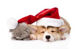 Perrito y gatito el dormir Pembroke Welsh Corgi con el sombrero rojo de santa Aislado fotografía de archivo