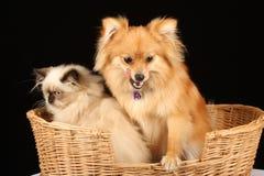 Perrito y gatito en cesta imagen de archivo libre de regalías