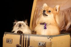 Perrito y gatito en maleta Imágenes de archivo libres de regalías