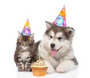 Perrito y gatito en sombreros del cumpleaños Aislado en el fondo blanco imagen de archivo