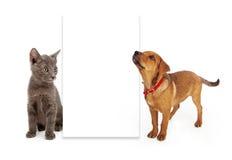 Perrito y gatito que miran la muestra en blanco Imágenes de archivo libres de regalías