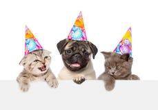 Perrito y gatitos en los sombreros del cumpleaños que miran a escondidas de detrás tablero vacío Aislado en blanco Foto de archivo libre de regalías