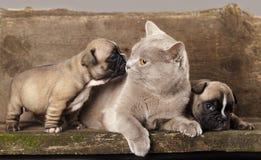 perrito y gato Imagen de archivo libre de regalías